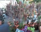 Santo Bouquet promove oficinas nesta semana