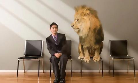 É hora de alimentar o Leão!