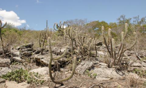 Seminário Internacional destaca os desafios e oportunidades da Caatinga
