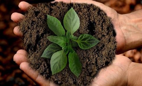 Produtos sustentáveis auxiliam na recuperação do meio ambiente
