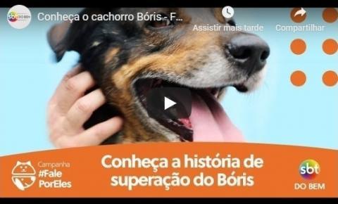 SBT do Bem dá voz a animais na campanha #FALEPORELES