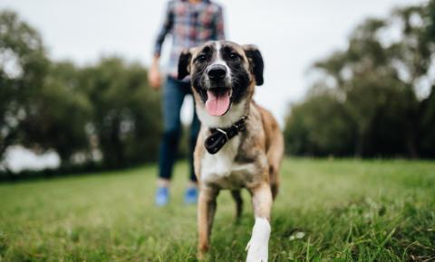 UniAvan promove palestra gratuita sobre noções de adestramento de cães