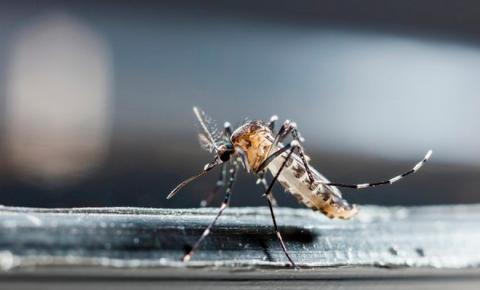 MINUTO DA SAÚDE: Saiba onde surgiu o mosquito transmissor da dengue, Zika e chikungunya
